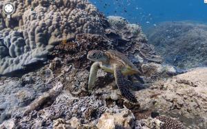 Google maps immagini subaquee