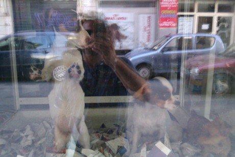 Cani sotto vetro 01