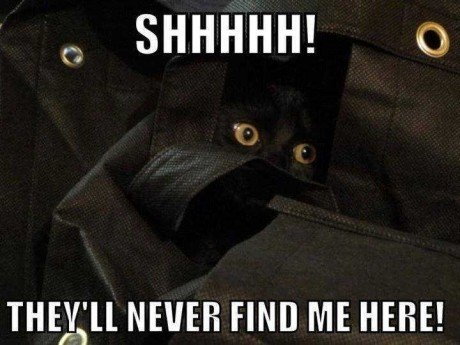 Stealth Mode Cat Funny Picture