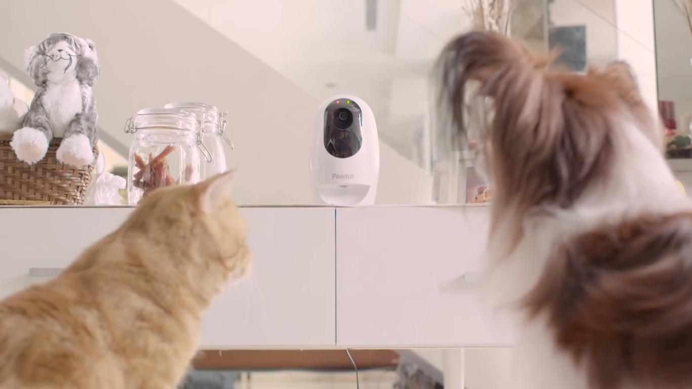 Pawbo+ è la nuova cam wireless di Acer, pensata per gli animali domestici