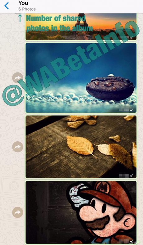 Whatsapp album foto 2