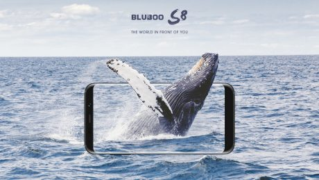 Bluboos8 pre