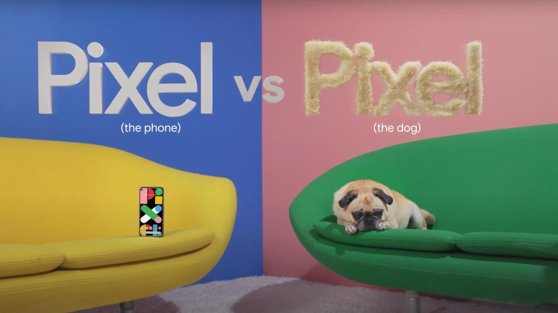 Come se la cava Google Pixel 4a contro un carlino? Scopritelo in questo video